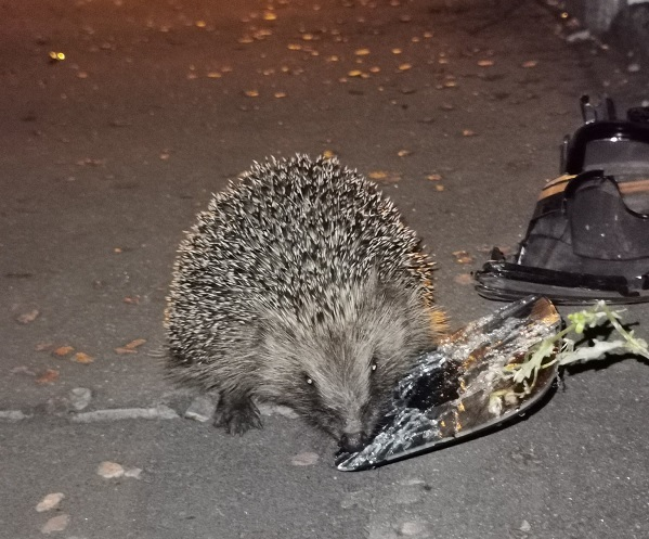 Brighouse hedgehog helps West Yorkshire Police roads unit