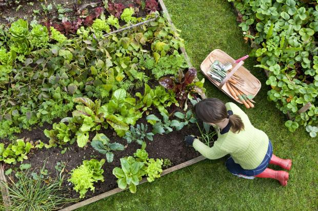 Gardening can be hard work and is not always the relaxing pastime it is believed to be.