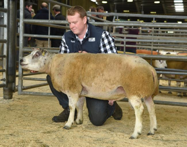 Rob Ellis with the Beltex shearling ram which sold for 2,400gns. Picture Moule Media