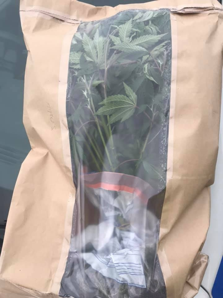 Cannabis plants totaling 166 seized by police in Bradford centre