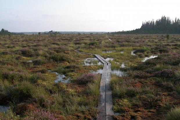 Peat bogs act as a store for carbon and water