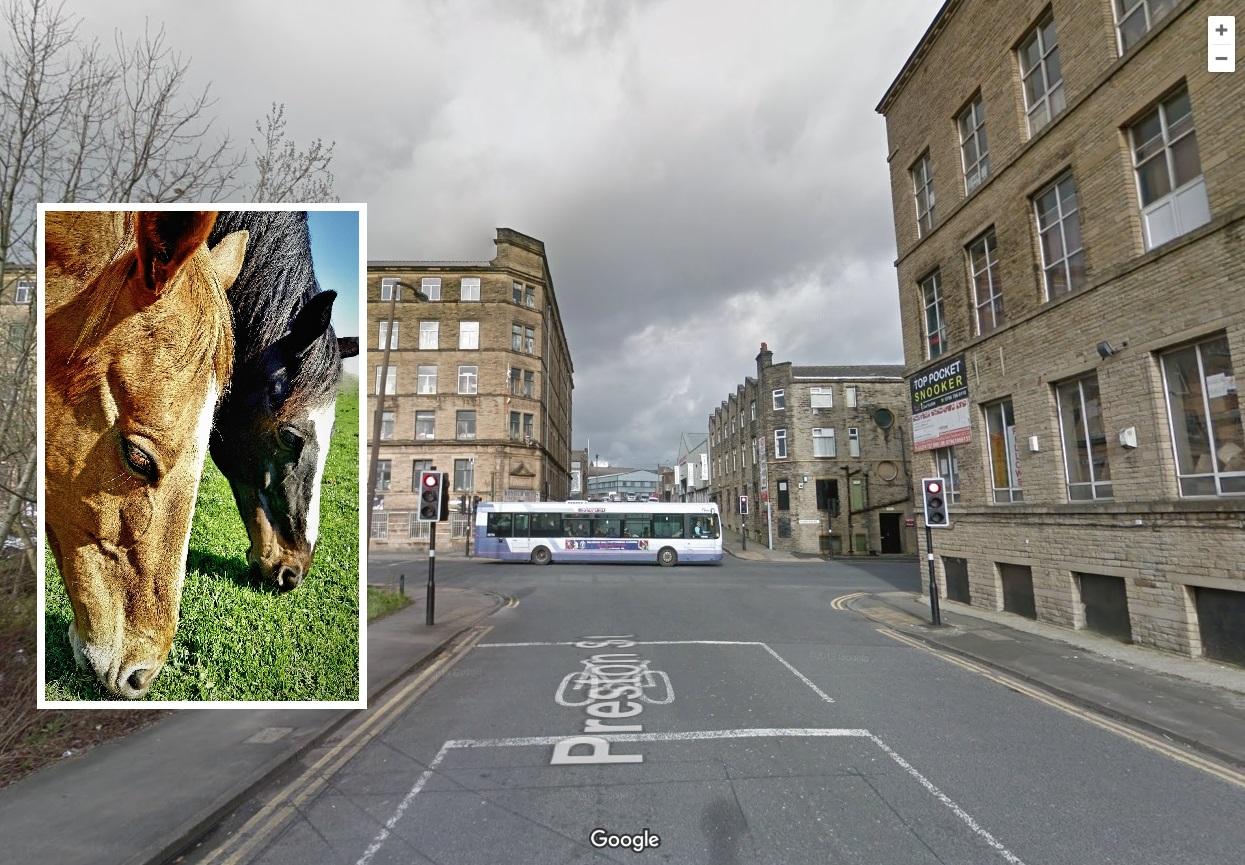 Horses loose near Bradford city centre on Preston Street