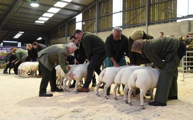 Prime lambs saw swift bidding at Skipton Auction Mart's weekly Monday sale