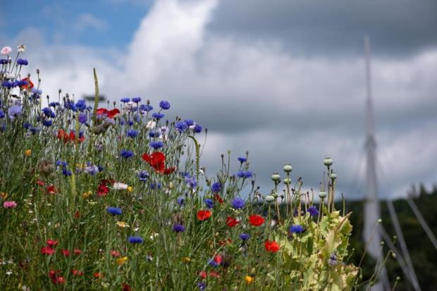 Wildflower verges in Bingley; picture by Deborah Clarke T&A CC