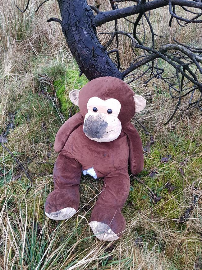 Motorway Martin saves monkey from the perils of the M62