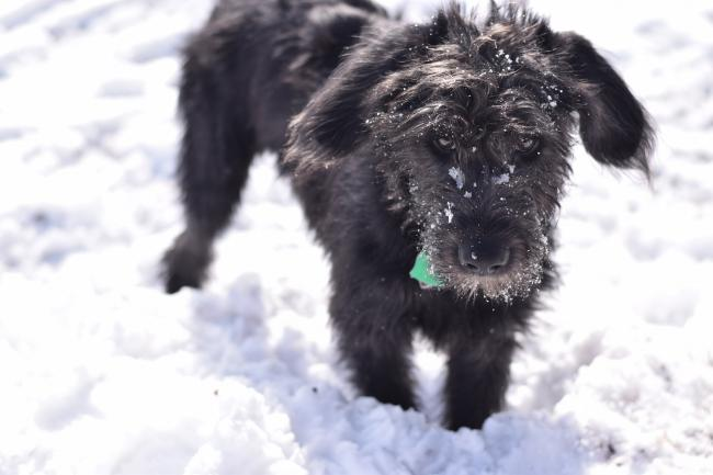 Owners should give their dogs' paws a rinse after each walk to wash off any salt, ice or snow. Picture: Pixabay/Sean Moran