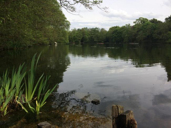 The Coppice Pond at St Ives, one of many scenic locations popular with visitors to the estate