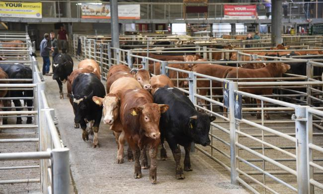 CCM store cattle sale. File photo