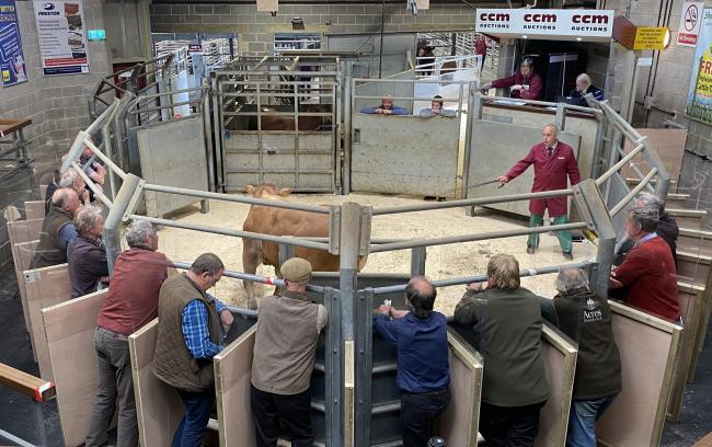 Buyers attending the cattle sales at Skipton Auction Mart with safety buyer booths