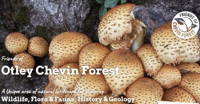 A homepage image from the new Friends of Chevin Forest website