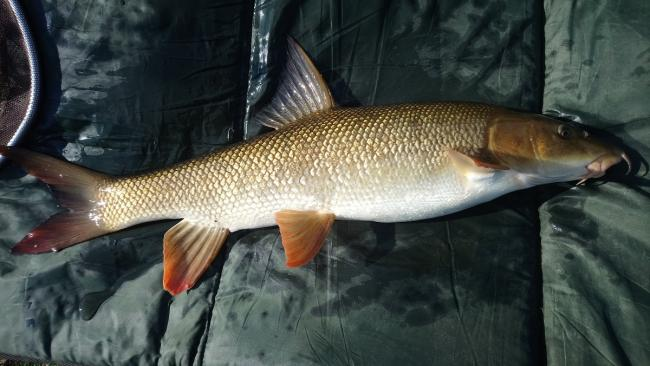 Barbel big and small feature heavily in this week's Leeds & District A.S.A report