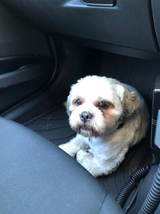 The plucky pooch who had to be rescued by police. Credit: WYP RPU/Twitter