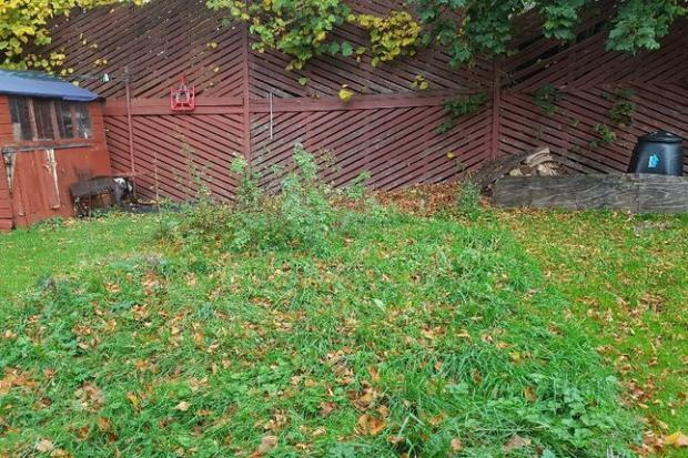 Bradford Telegraph and Argus: The garden (Photo: Zoopla)