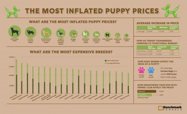 Bradford Telegraph and Argus: The most inflated puppy prices. (Benchmark Kennels)