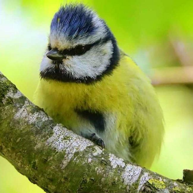 Blue tits have the right idea about raising a large family