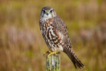 Yorkshire birdlife boosted by government grant