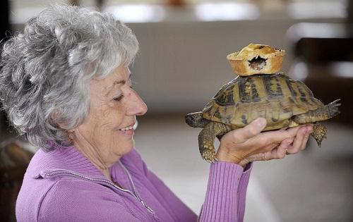 PIE-FECT DAY: Carol Hall is planning to hold a big party to celebrate her pet tortoise Meatpie's 60th birthday