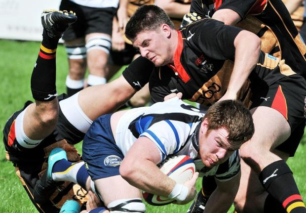 Ollie Stedman, bottom, has joined Newcastle Falcons from Tynedale