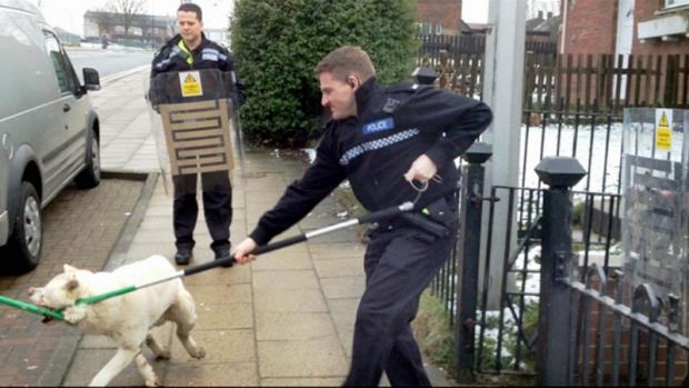 Police officers seize an Akita dog from a property in Broadstone Way, Holme Wood
