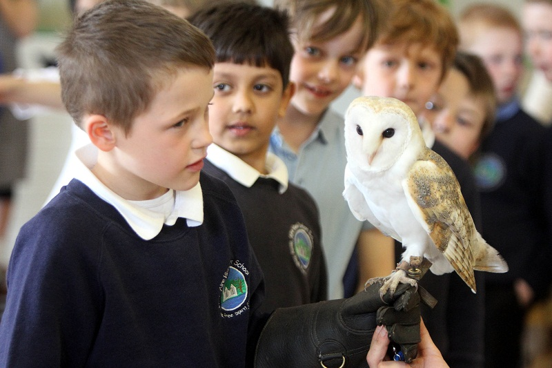 Cameron Hill meets a barn owl