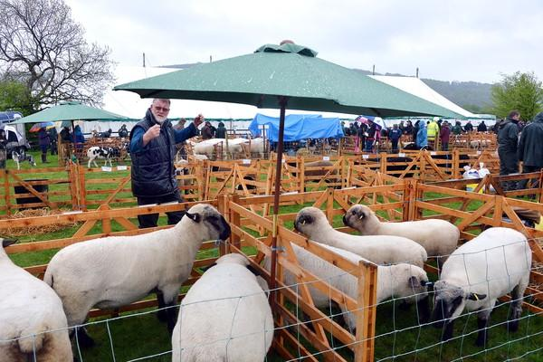 Sheep at last year's show