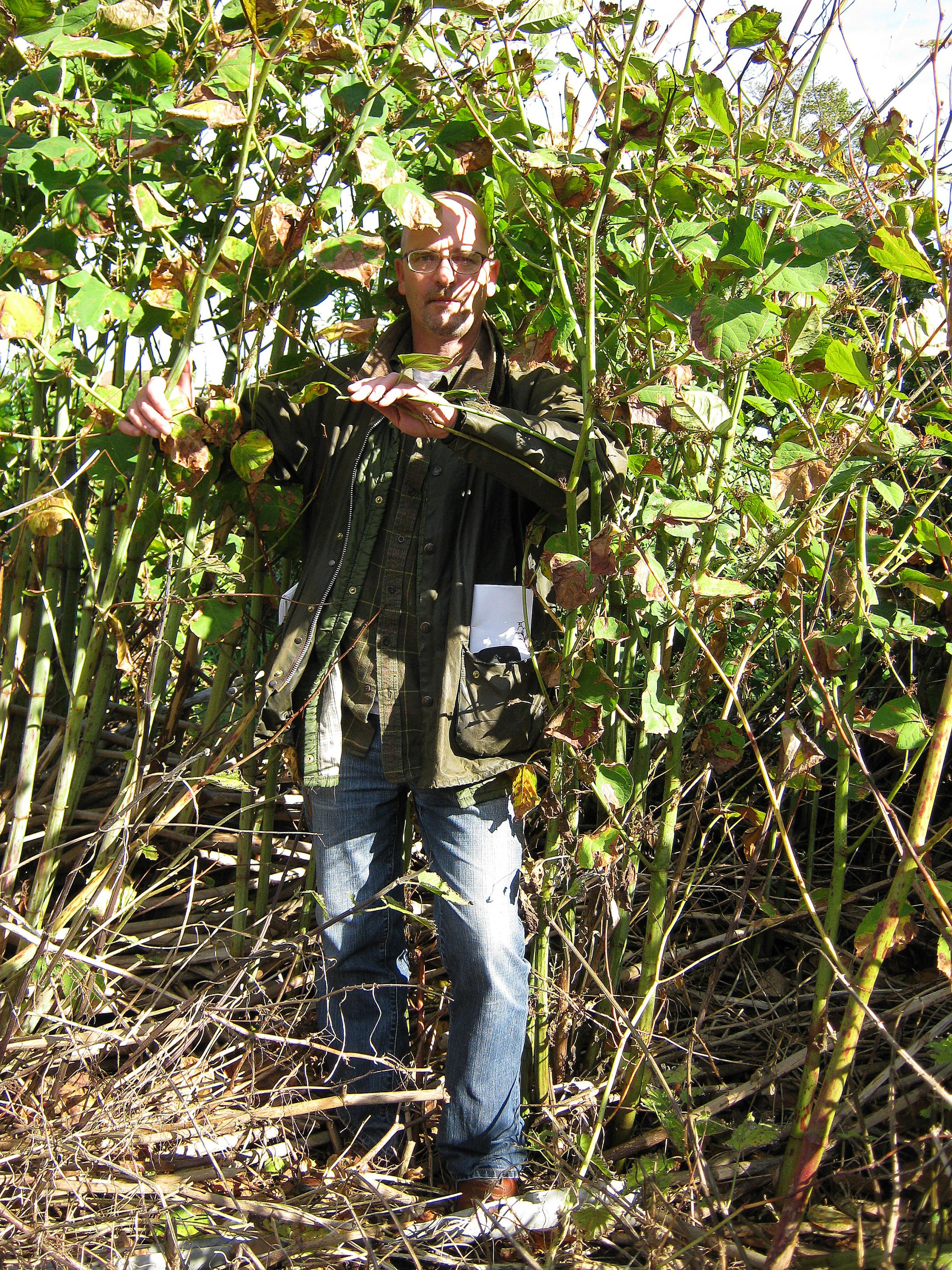 T&A reporter Chris Tate demonstrates the scale of the invasive Knotweed problem