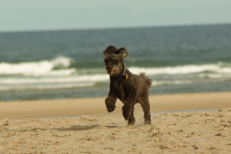 dog training   jane taylor   dog training in colne