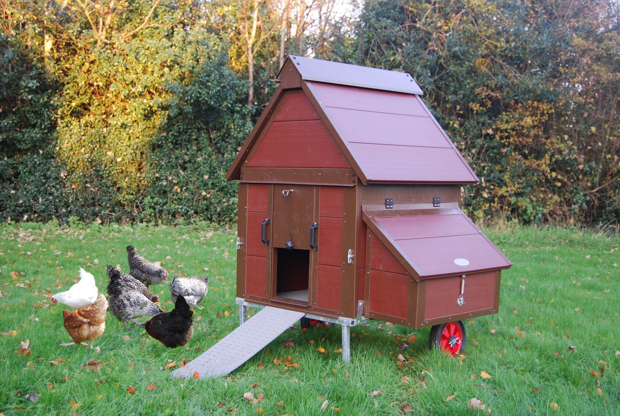 The plastic hen house