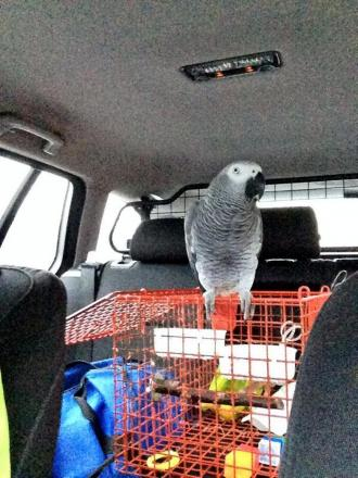 Learner driver stopped on M62 - accompanied by only her pet parrot
