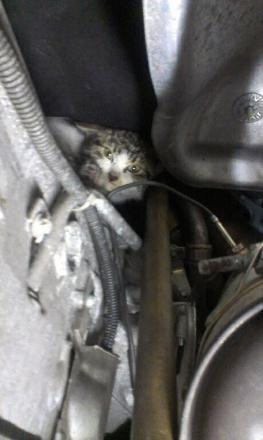The cat in the engine bay