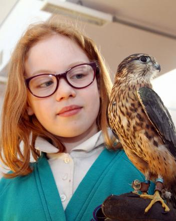 Merlin Top Primary School pupil Natallia Norris, nine, meets Murphy the merlin during a visit to the school by SMJ Falconry
