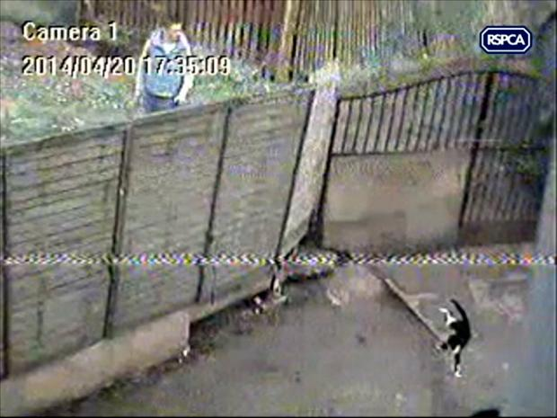 The teenager in the light blue top is captured on CCTV as the black and white cat is thrown over the fence