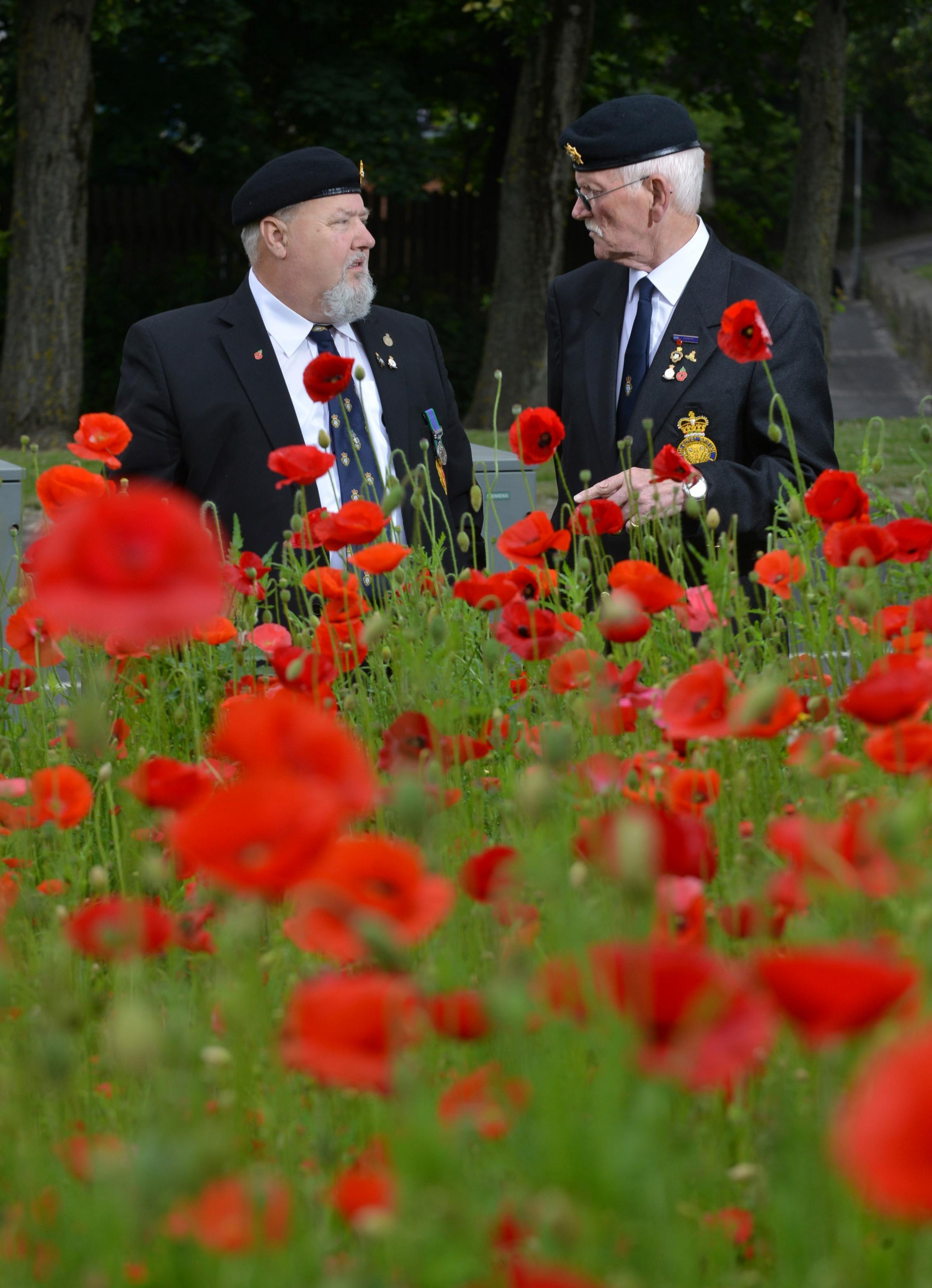 VIDEO: Magnificent poppies act as World War One tribute