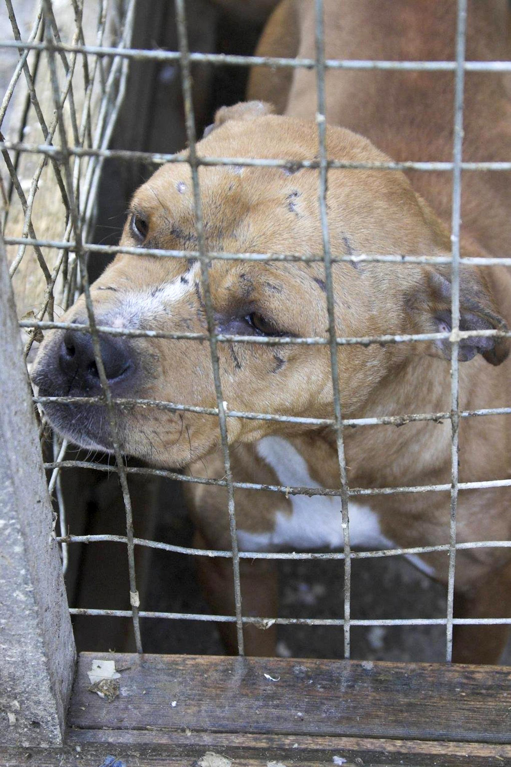 Why are animal cruelty convictions on the rise in Bradford?