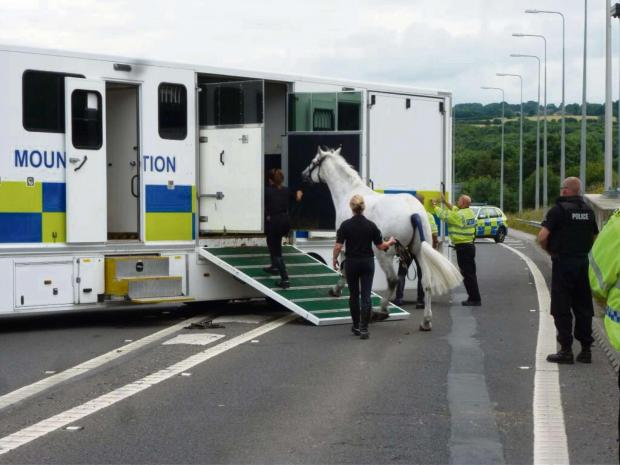 Police horse being transferred from the broken-down horsebox at Chain Bar