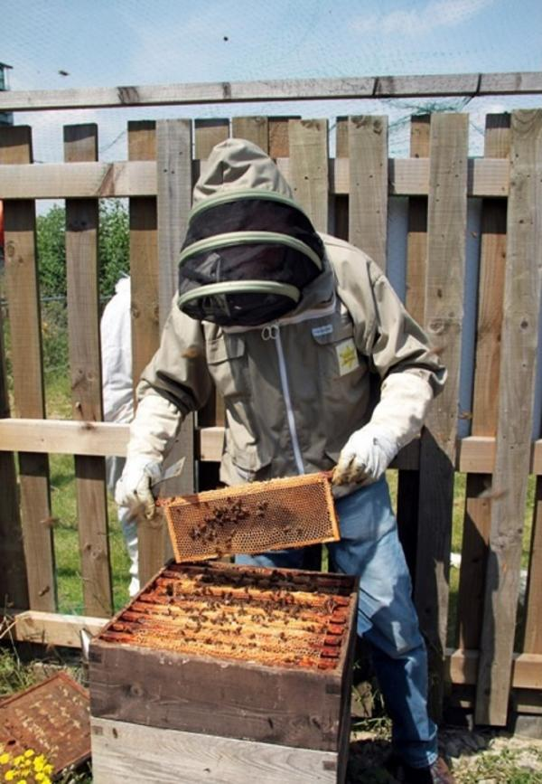 T&A grant helps give youngsters the beekeeping bug with schools project