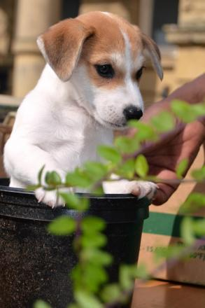 LIFT: A dog gets a ride in one of the plant pots being given away by Shipley College