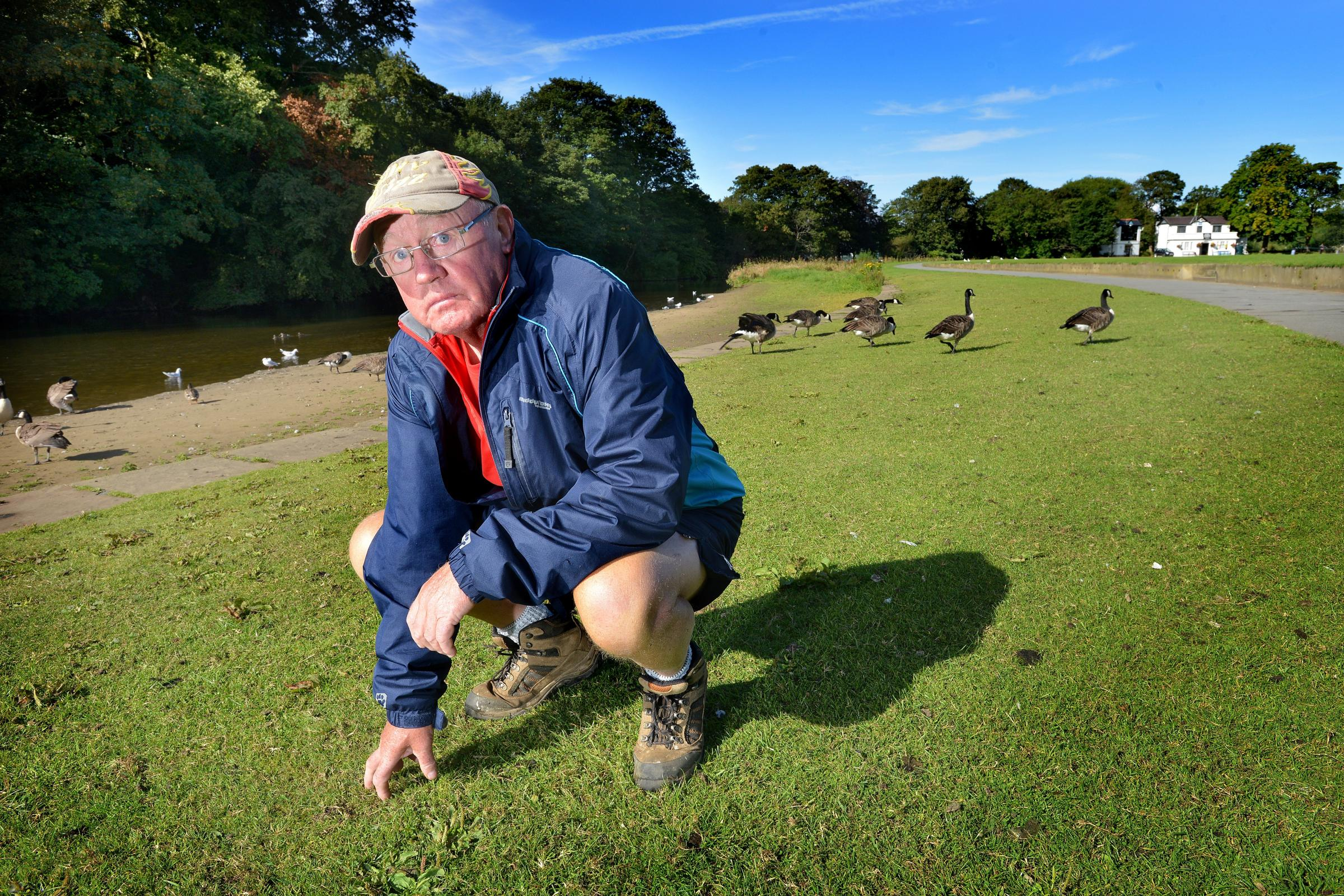 VIDEO: Canada geese force Saltaire Cricket Club into daily clean-up operation