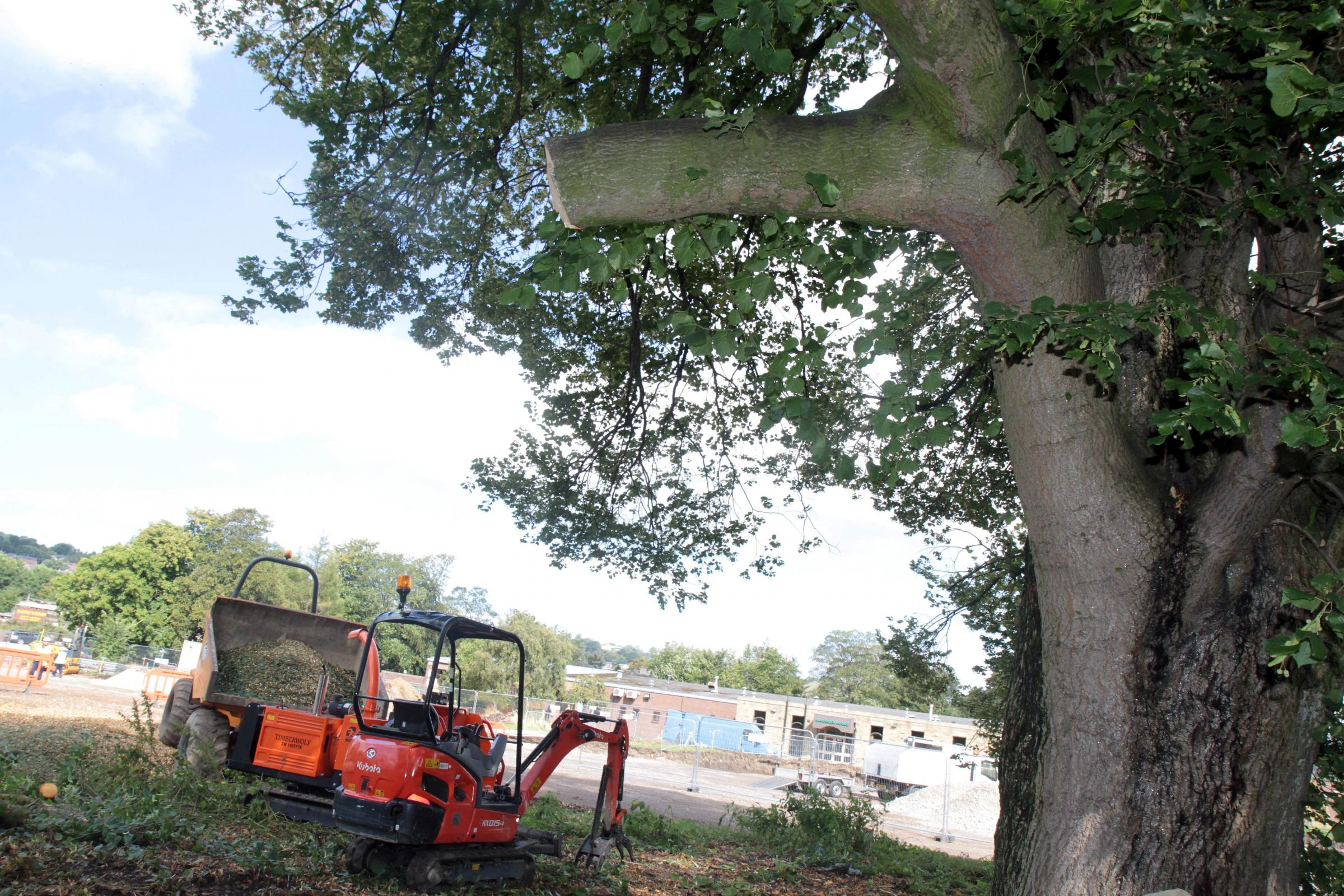 Campaigners fail in bid to stop 250-year-old tree being chopped down