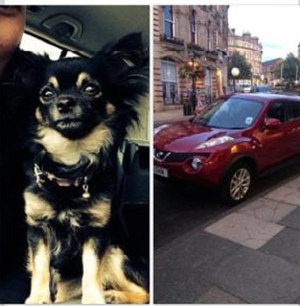 Owner's desperate appeal after chihuahua is taken by car thief