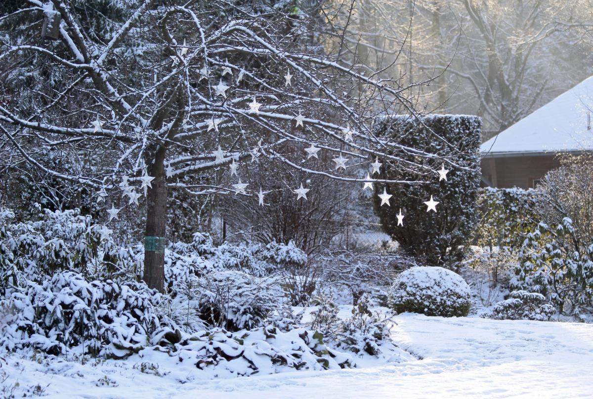 create a festive fairytale garden bradford telegraph and argus