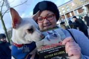 Natalie Ward and her dog were among the Facebook friends who gathered in Centenary Square in January in a bid to bring Murphy home
