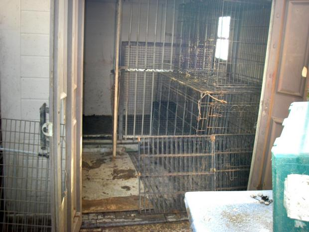 Bradford Telegraph and Argus: The shed where some of the dogs were kept in cages