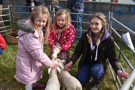 Children feeding lambs at Presteigne food market