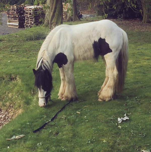 The stray horse at West Yorkshire Fire & Rescue Service's headquarters