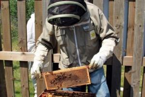 Bee Aware: A bee-keeper checking the hive - photo supplied by Bradford Beekeepers Association