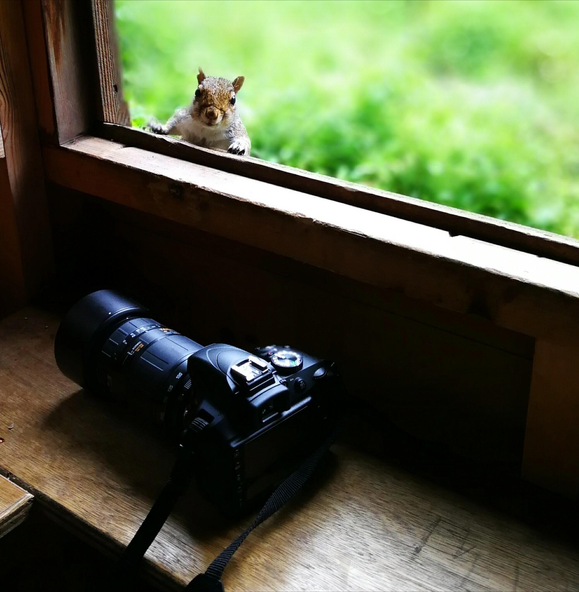 for amateur Amateur camera photographers clubs