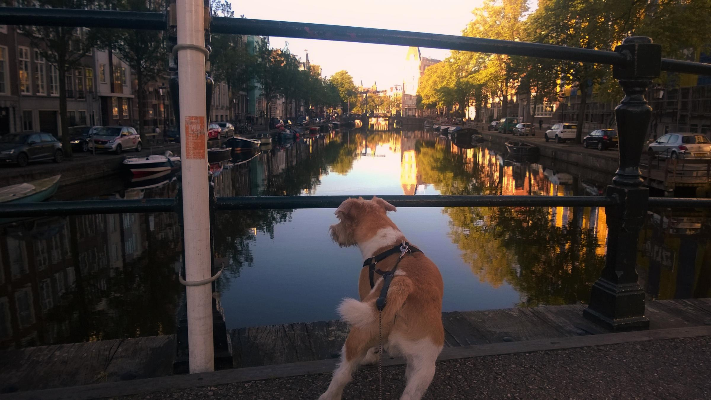 Falco enjoying the canal view in Amsterdam. Pictures:Paul Wojnicki