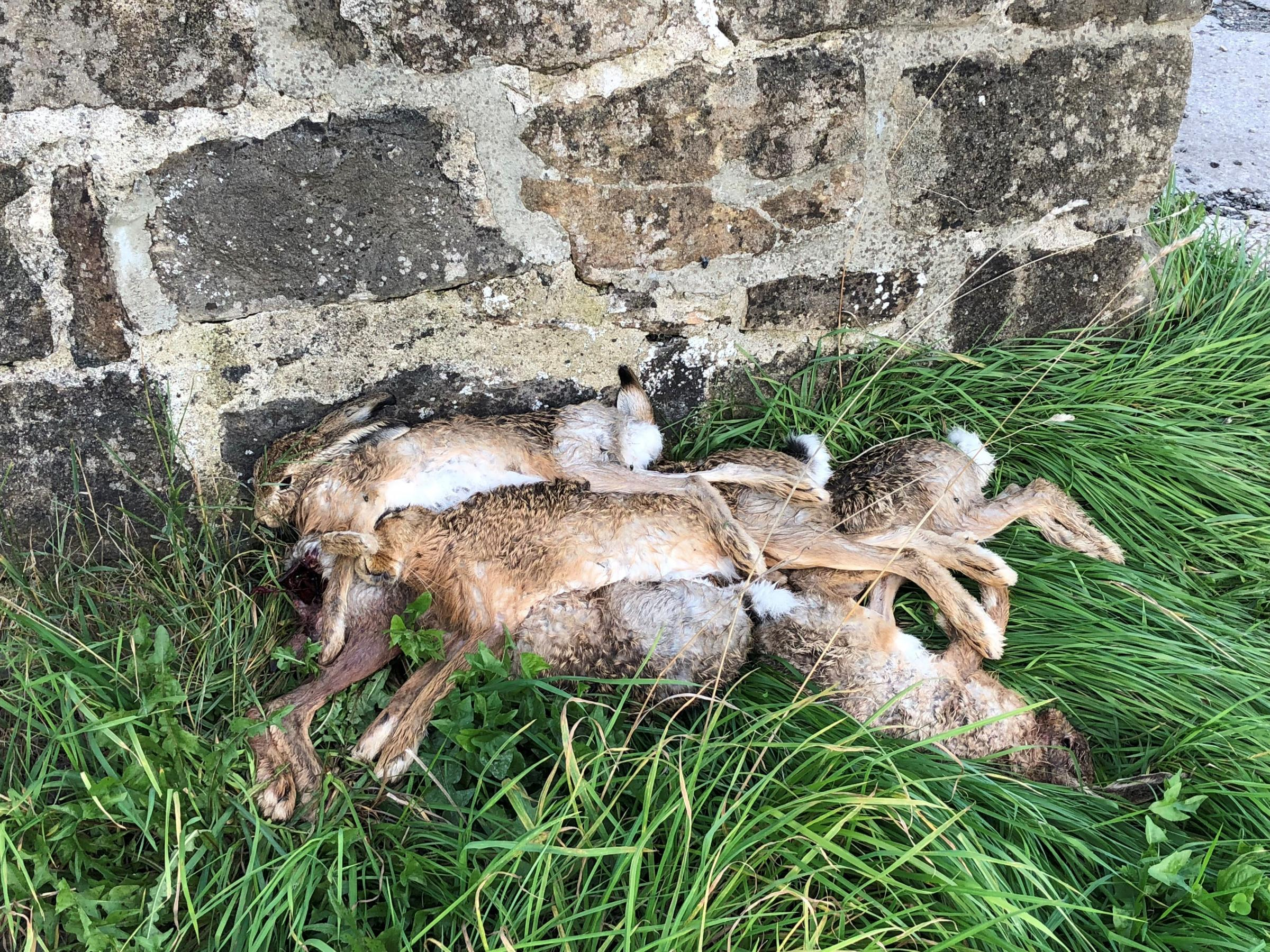 Hares which had been killed and dumped on land near Bradley