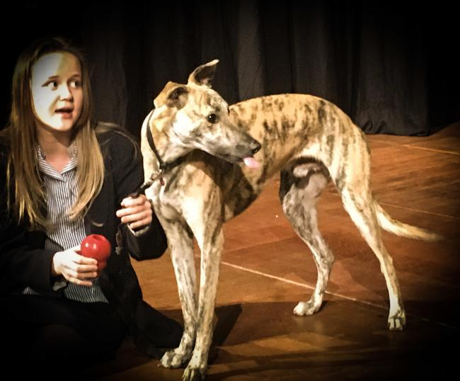 Rescue dog Billy is star of school production of Annie at Hipperholme Grammar School